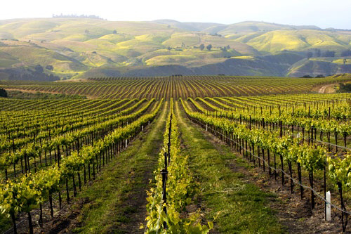 Best Free Winery Tours In Sonoma